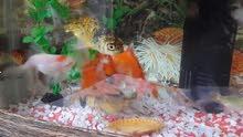 حوض سمك مع اغراضه