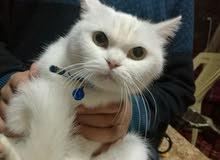 قطاه مطعمه واخذه حبت الدود قابله للطافاوص ومعاه دفتر ماطاعيم