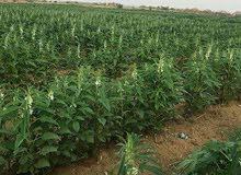 للبيع مزرعه 48فدان مسجله عقد أخضر ري نيلي بالغمر