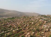 أرض للبيع في شفا بدران زينات الربوع كامل الخدمات