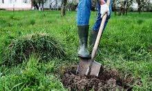 زراعه الاشجار وتنظيف الحدائق