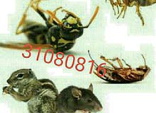 شركة مكافحة للحشرات والقوارض والزواحف بأرخص الأسعار أتصل