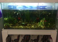 الاسماك مع الحوض للبيع