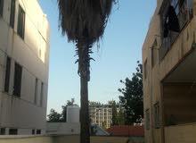 شجره نخيل طول 10 متر