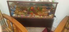 حوض سمك كامل اغراض