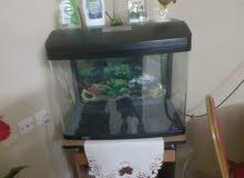 حوض سمك fish tank