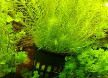 نباتات احواض