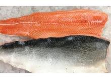 سمك سلمون .سمك فيليه