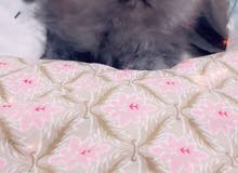 cat....قطط هاف بيكي