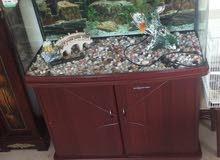 حوض سمك حوض سمك