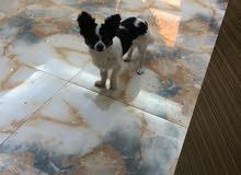 كلاب جي واوا من اسبوع الى 10 شهور