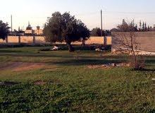 قطعة ارض سكنية للبيع - قصر بن غشير