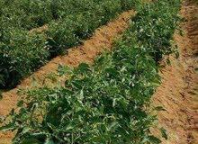 ارض زراعيه للبيع على طريق مصر اسيوط الغربي قابله للتجزئه بالمرافق و الخدمات