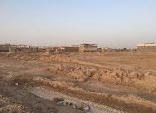 قطعة أرض طابو صرف أبو الخصيب طلاع الحمزة المساحة 250