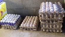 بيض بط عماني