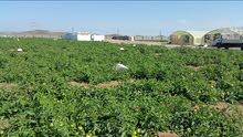 مزرعة في المضيبي