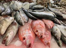 مأكولات بحرية طازجة ، سمك ، جمبري ، لوبستر ، لحم ضأن ، لحم بقري ، خدمة التوصيل ل