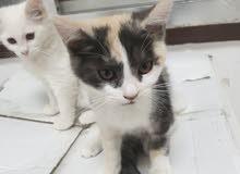 2 cats.