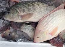 هل  تبحث  عن  شخص  خبرة  في  مجال الاستزراع السمكي  السمك البلطي وغيرها من الاسم