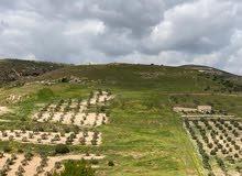 أرض زراعية تصلح لأنشاء مزرعة او شالايهات