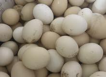 بيض مكس للبيع براهما وفرنسي ومحلي للتفقيس أو للاكل