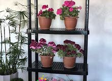 For sale Shelves that's condition is New - Amman