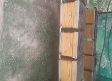 انشاء مناحل العسل وبيع خلايا النحل بالكويت وفرز العسل 50733026