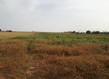 مزرعه مساحتها 6هكتار ملك بوادي الربيع على 3واجهات بها حجرات و2بئر ماء للبيع