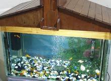 حوض سمك للبيع عرض 70سم ارتفاع 40سم نزال 40سم بي اكثر من 20 سمكةهذا رقمي