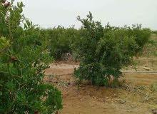اراضى زراعيه للبيع من شركه بدر جروب الجديدة للتنميه الزراعيه