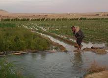مزرعة 7 فدان مزروعة زيتون ونجيل ومحاصيل خضرة منتجة الارض مسجلة