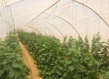 مزرعه للبيع باستراحة و 2 عنبر و 12 صوبة زراعيه