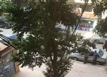 شقه للبيع في الدقي شارع صالح سليم متفرع من شارع هارون قرب الشهر العقاري