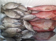 لمحبين السمك تفضلو