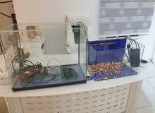 2 Fish Tank