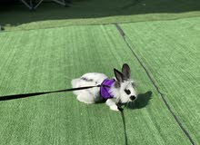 sweet healthy bunny for sale
