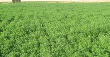 للبيع 80 فدان أرض زراعية بالوادي الجديد