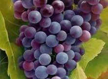 مشتل السلام لبيع جميع اشجار الفاكهة