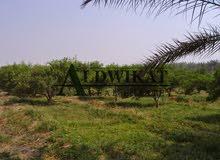 ارض للبيع في خان الزبيب , مساحة الارض 10000م