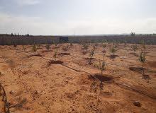 قطعة أرض للبيع مساحتها حوالي 3000 متر تقريبا مسيجة وبها 100 شجرة ليمون وري ثابت