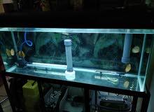 حوض سمك كبير