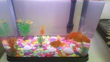 aquarium with 4 free gold fish