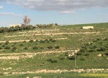 قطعة ارض مزروعة زيتون
