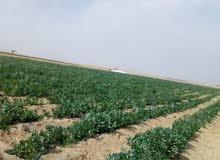 ارض متكامله الخدمات وممهده للزراعه