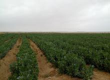 نحن نتميز عن الاخرين ارض كامله بعض المرافق بها جميع الخدمات و تصلح لجميع الزراعا