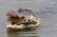 مطلوب Crocsمستعمل او جديد بسعر مناسب والون اسود