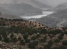 ارض 3500 مطله  سد الملك طلال وتل الرمان جرش عمان