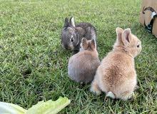 Newborn bunnies