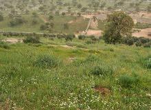 بالاقساط مزرعة مميزة للبيع في العالوك تل القمر منطقة شاليهات مساحة 3800م من المالك مباشرة