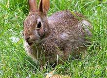 مطلوب ارانب بلديه للبيع
